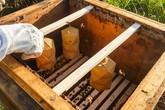 Beehive jsou světla s výrazným podílem práce včel. Start-up má nejen produkovat originální svítidla, ale chce také zvýšit počty včel. Foto: Eduard Seibert
